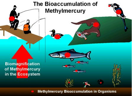 Mercury an assessment of its life for Fish with least mercury