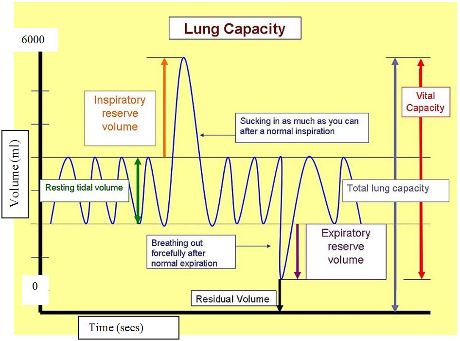 lung capacity How can the answer be improved.