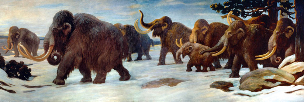 Figure 3: Woolly mammoths near the Somme River, American Museum of Natural History mural.